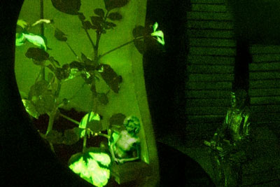 Glowing nanobionic watercress plants illuminate the Plant Properties Reading Room. (Image: KVA Matx and Strano Research Group)